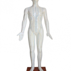 Acupuncture model 178CM XC-501B