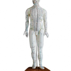 Acupuncture model 46CM male XC-505 Human acupuncture models