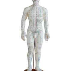 Acupuncture model 50CM male XC-503 Human acupuncture models