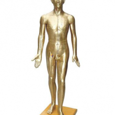 Deluxe acupuncture model 178CM (copper color); XC-501A, Human acupuncture models