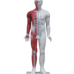 Deluxe acupuncture model 84CM XC-502 Human acupuncture models