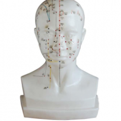 Life size head acupuncture model XC-507A Head acupuncture models